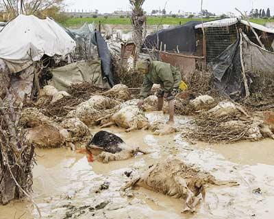 إسرائيل الأمطار 79871.jpg