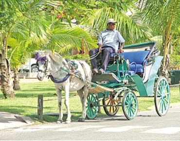 الدومينيكان وجهة سياحية مميزة بتكلفة 104196.jpg