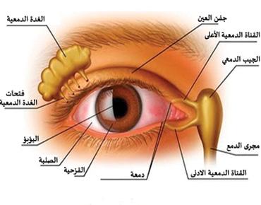 أعراض تنذر بمشاكل البصر لدى الأطفال 250684